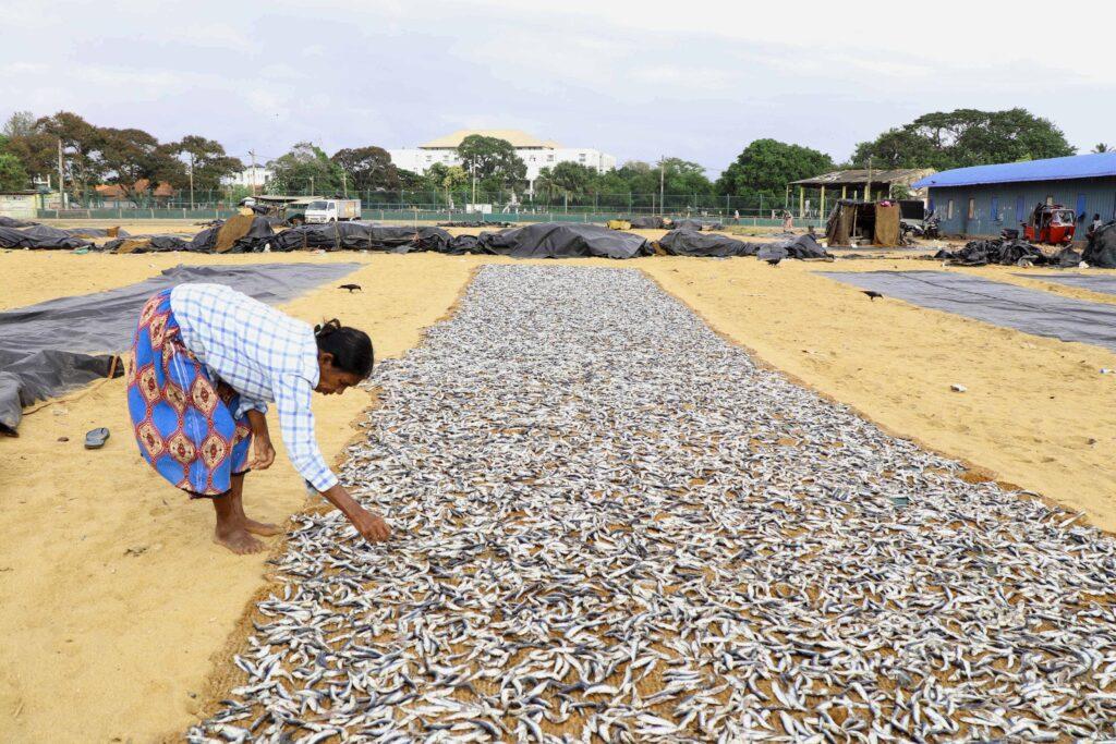 Sri Lanka Negombo vismarkt